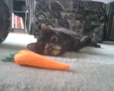 Alice and the Carrot