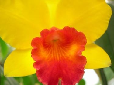 Rjh_flower_1